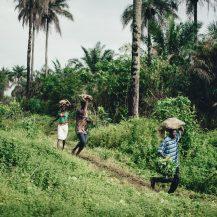 Cadbury: On Their Sustainability Project, Cocoa Life