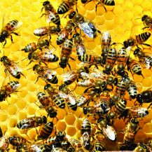 How to make your garden bee friendly