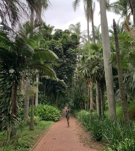 garden day sa durban botanical gardens