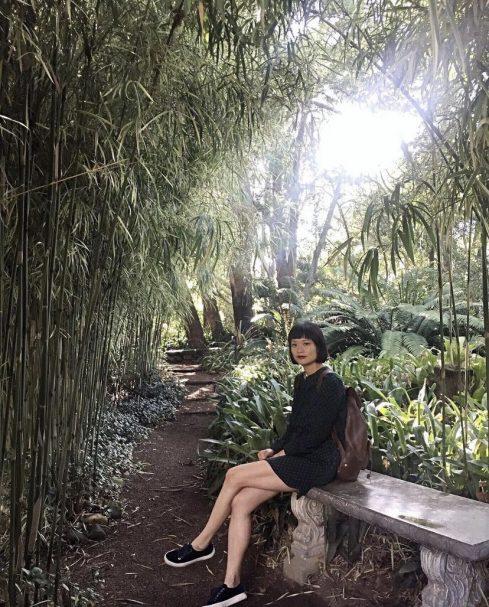 garden day sa stellenbosch botanical garden bamboo