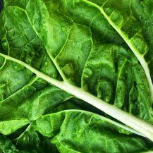 Spinach Recipe Round-Up